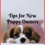 Tips for New Puppy Owners: What to Expect