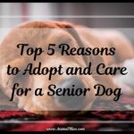 Top 5 Reasons to Adopt and Care for a Senior Dog