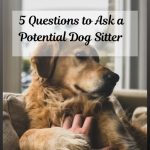 5 Questions to Ask a Potential Dog Sitter