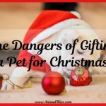 The Dangers of Gifting a Pet for Christmas