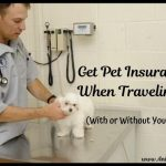Get Pet Insurance When Traveling With or Without Your Pet
