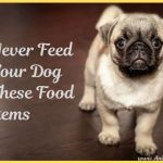 Never Feed Your Dog These Food Items [Infographic]