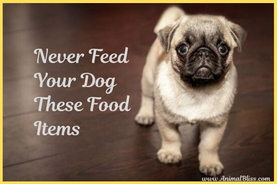 Never Feed Your Dog These Food Items [Infographics]