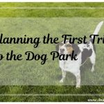 Planning Your First Trip to the Dog Park