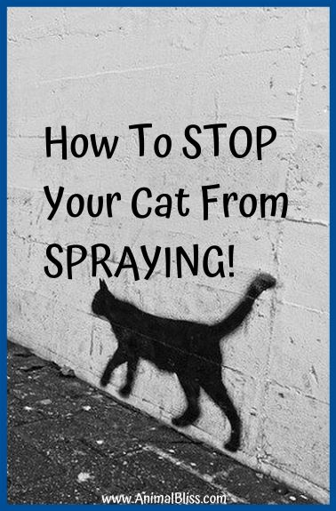 How to Stop Your Cat From Spraying Inside the Home
