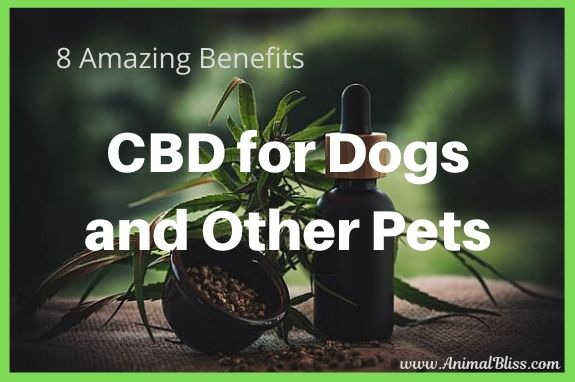 8 Amazing Benefits of CBD for Dogs and Other Pets