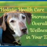 Holistic Health Care Can Help Your Dog Increase Overall Wellness