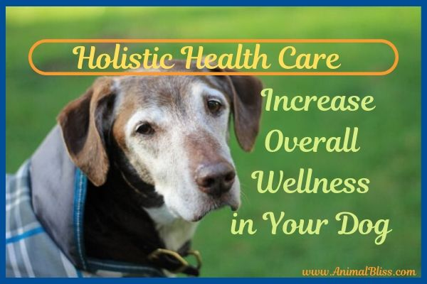 Holistic Care for Dogs