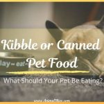 Kibble or Canned Pet Food? What Should Your Pet Be Eating?