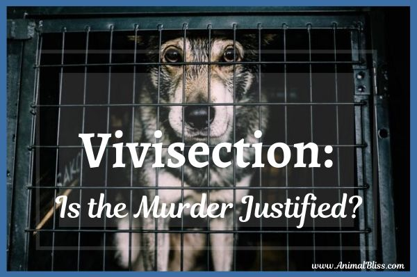 Vivisection: Is the Murder of Animals Justified?
